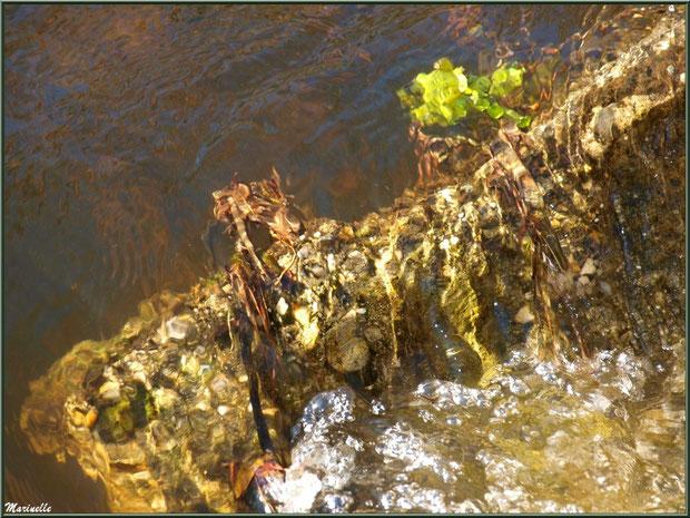Reflets d'or à l'une des écluses et sa cascade sur le Canal des Landes au Parc de la Chêneraie à Gujan-Mestras (Bassin d'Arcachon)