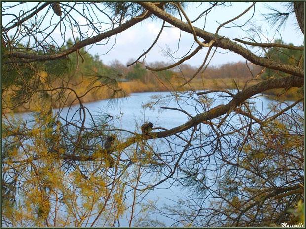 Pins et tamaris en décembre en bordure d'un réservoir, Sentier du Littoral, secteur Moulin de Cantarrane, Bassin d'Arcachon