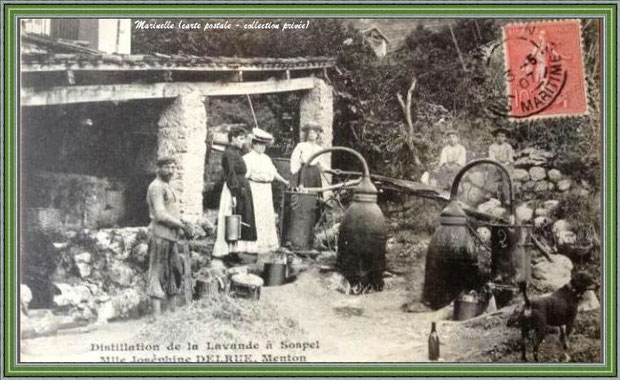 Autrefois... Distillation de la lavande en 1907 (carte postale - collection privée)