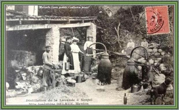 Autrefois... Distillation de la lavande en 1907 (carte postale - collection privée)