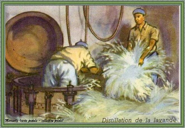 Autrefois... Distillation de la lavande (carte postale dessinée - collection privée)