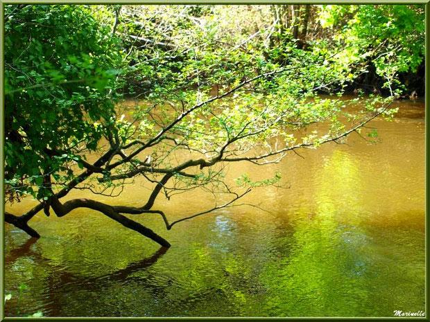 Verdure et reflets en bordure de La Leyre, Sentier du Littoral au lieu-dit Lamothe, Le Teich, Bassin d'Arcachon (33)