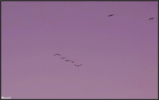 """""""Vol de nuit"""" au-dessus du Sentier du Littoral, secteur Moulin de Cantarrane, Bassin d'Arcachon"""