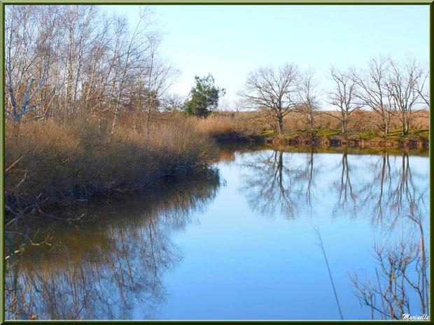 Reflets dans un réservoir, Sentier du Littoral, secteur Port du Teich en longeant La Leyre, Le Teich, Bassin d'Arcachon (33)