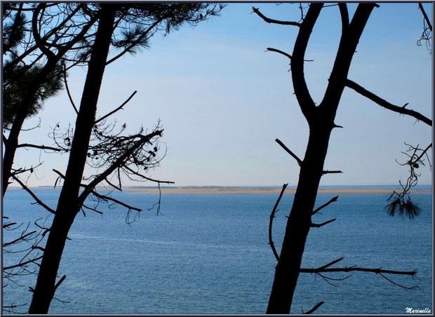 Vue depuis les hauteurs de La Corniche à Pyla-sur-Mer, Bassin d'Arcachon (33) : le Bassin, bancs de sable, Banc d'Arguin