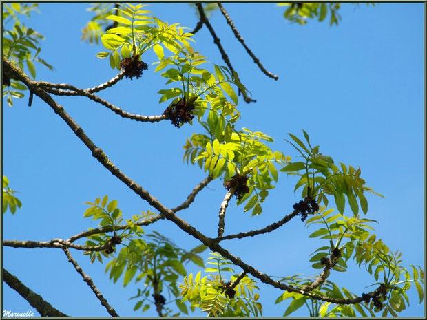 Le ciel à travers les branches, Pisciculture des Sources à Laruns, Vallée d'Ossau (64)