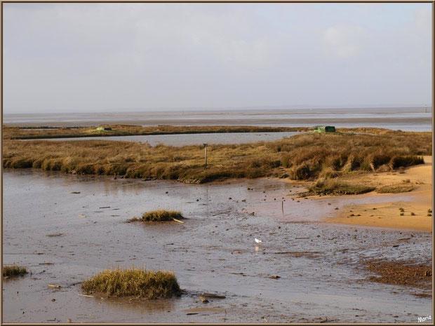 Marécage avec une mouette, tonnes pour la chasse avec leur lac à tonne, côté Bassin sur le Sentier du Littoral, secteur Moulin de Cantarrane, Bassin d'Arcachon