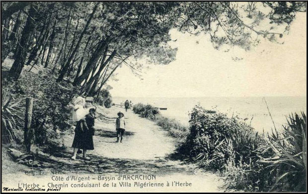 Chemin conduisant à la Villa Algérienne autrefois, Village de L'Herbe, Bassin d'Arcachon (carte postale ancienne, collection privée)
