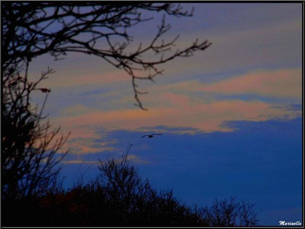 Vol de nuit au-dessus du Sentier du Littoral, secteur Port du Teich en longeant La Leyre, Le Teich, Bassin d'Arcachon (33)