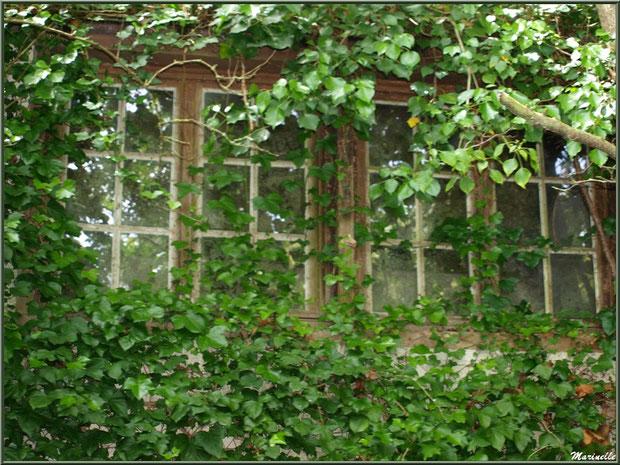 Habitation abandonné cachée par le lierre en bordure du Trieux, Pontrieux, Côte d'Armor (22)