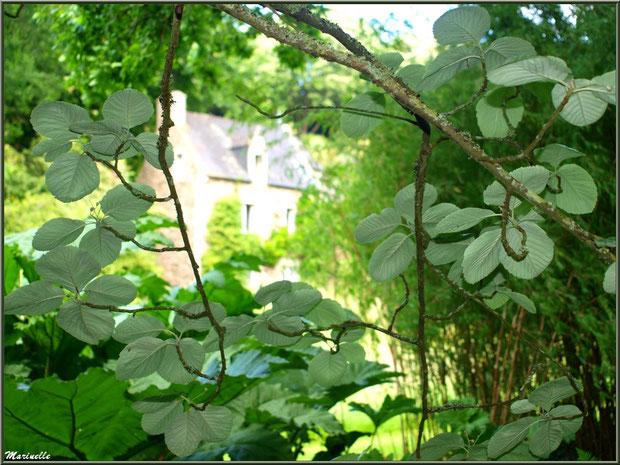 Le Manoir derrière une trouée dans la végétation - Les Jardins du Kerdalo à Trédarzec, Côtes d'Armor (22)
