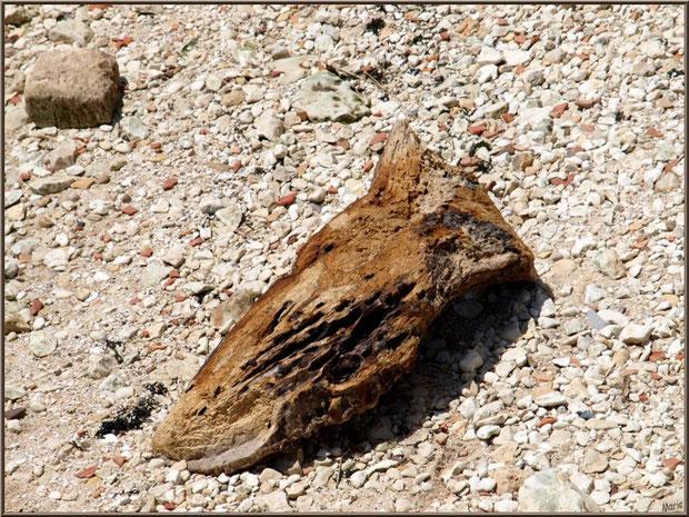 Bois flotté rejeté par La Gironde à Talmont-sur-Gironde (Charente-Maritime) : ce morceau de bois m'a fait penser, en le photographiant, à une tête d'animal