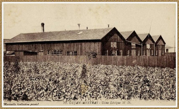 Usine conserverie Lévèque en 1909 à Gujan-Mestras, Bassin d'Arcachon (33)