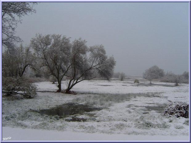 Les prés salés Ouest de La Teste de Buch sous la neige en décembre 2010 Bassin d'Arcachon
