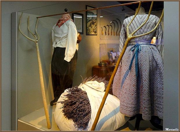 """Le """"Musée de la Lavande"""" à Coustellet (84) : anciens vêtements de coupeurs de lavande et outils"""