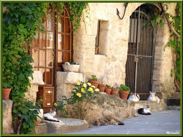 """""""la maison aux chats"""", village de Cucuron, Lubéron (84)"""