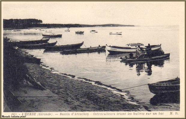 Ostréiculteurs triant des huîtres sur chaland, pinasses et canots, Village de L'Herbe autrefois, Bassin d'Arcachon (33)