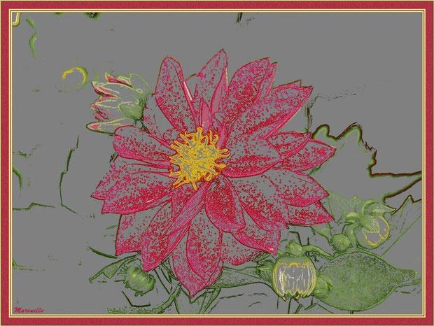 Dahlia : fleur et boutons