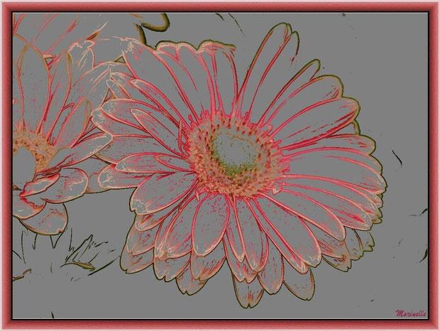 Gerbera rose