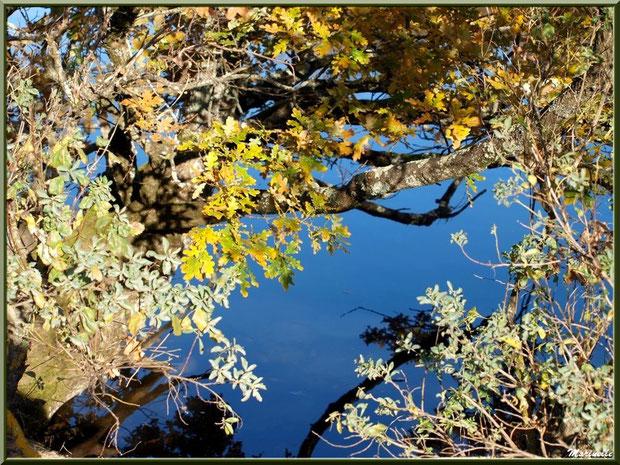Chêne et arbrisseau en bordure d'un réservoir sur le Sentier du Littoral, secteur Moulin de Cantarrane, Bassin d'Arcachon