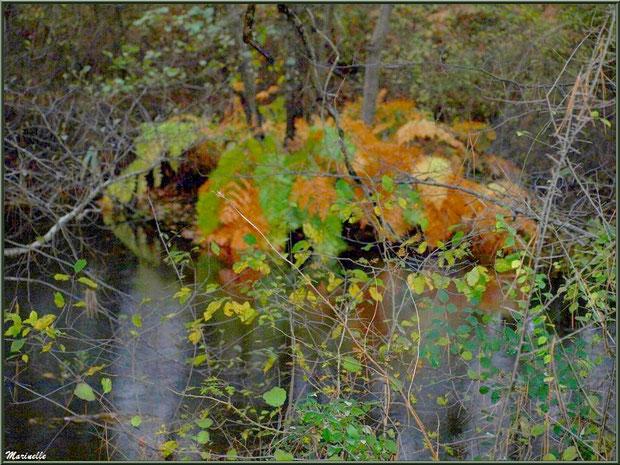 Un jour de pluie, végétation automnale et reflets en bordure du Canal des Landes au Parc de la Chêneraie à Gujan-Mestras (Bassin d'Arcachon)