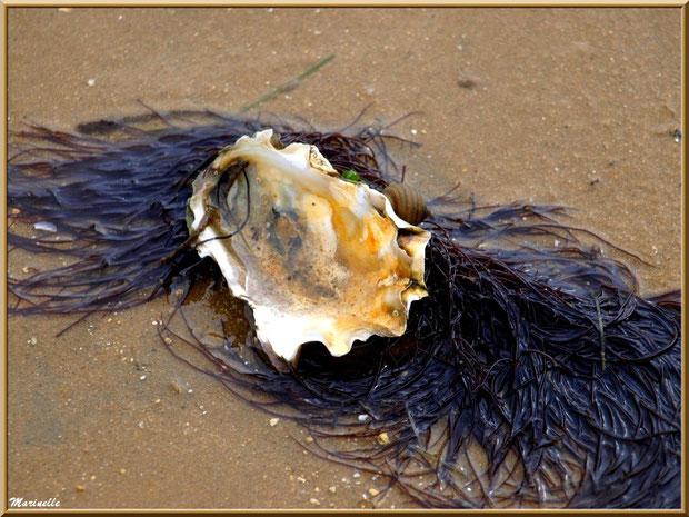 Oeuvre de la mer : Coquille d'huître, bigorneau et varech sur une plage du Bassin d'Arcachon (33)