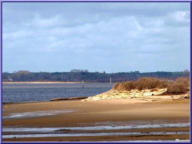La plage et une digue, un cormoran en vol, le Bassin et le Domaine de Certes et Graveyron à l'horizon, Sentier du Littoral, secteur Moulin de Cantarrane, Bassin d'Arcachon