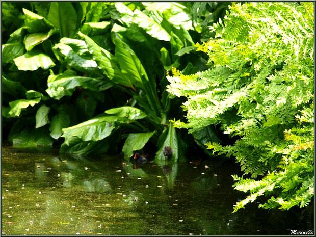 La faune cachée dans la flore du Petit Etang au bas de la Cascade - Les Jardins du Kerdalo à Trédarzec, Côtes d'Armor (22)