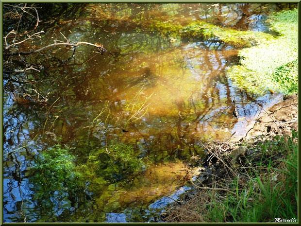 Mousses aquatiques et reflets sur La Leyre, Sentier du Littoral au lieu-dit Lamothe, Le Teich, Bassin d'Arcachon (33)