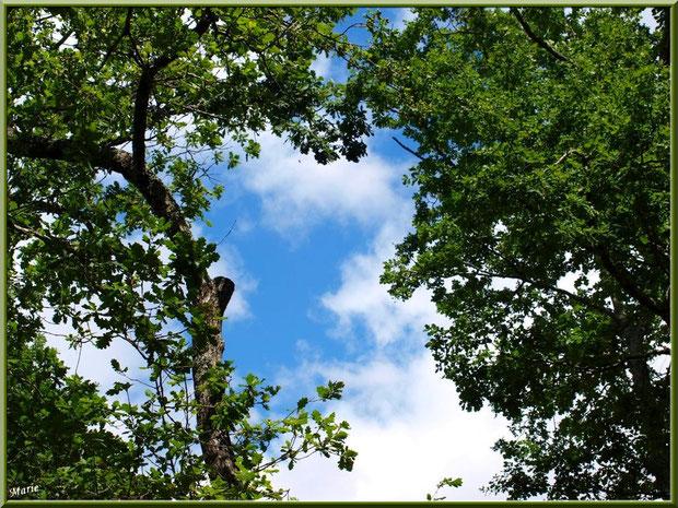 Un bout de ciel au travers des chênes au Parc de la Chêneraie à Gujan-Mestras (Bassin d'Arcachon)