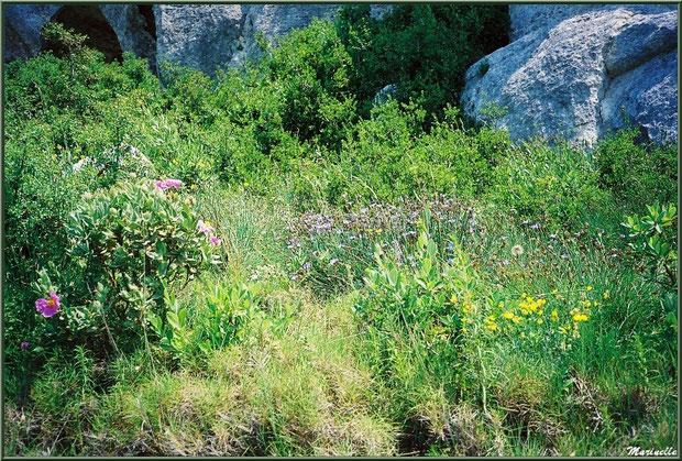 La végétation de la garrigue dans le Val d'Enfer, Baux-de-Provence, Alpille (13)