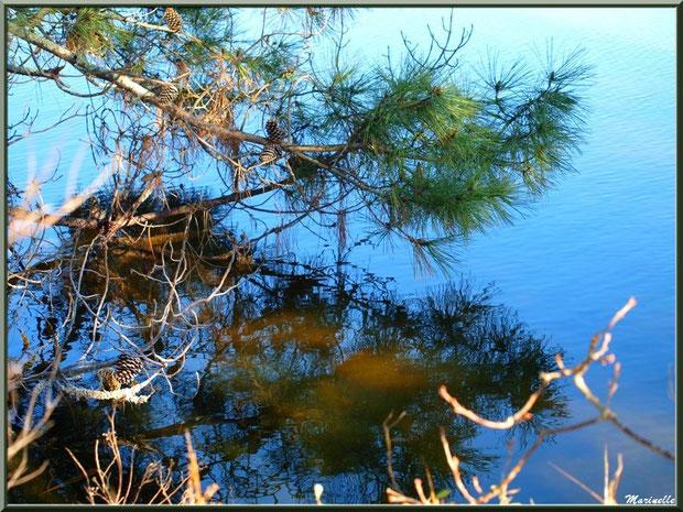 Reflets dans un réservoir, en janvier, sur le Sentier du Littoral, secteur Moulin de Cantarrane, Bassin d'Arcachon