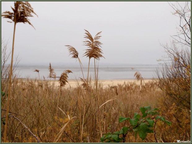 Végétation par temps gris hivernal, côté Bassin, Sentier du Littoral, secteur Moulin de Cantarrane, Bassin d'Arcachon