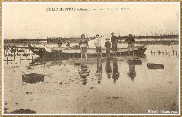 Gujan-Mestras autrefois : Culture des huîtres sur les parcs, Bassin d'Arcachon (carte postale, collection privée)
