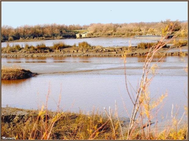 Marécage côté Bassin avec une écluse en fond, Sentier du Littoral, secteur Domaine de Certes et Graveyron, Bassin d'Arcachon (33)