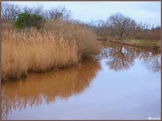 Reflets sur un ruisseau en bordure des prés salés, Sentier du Littoral secteur Pont Neuf, Le Teich, Bassin d'Arcachon (33)