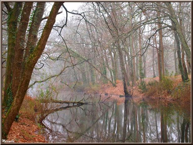 Le Canal des Landes et ses reflets dans la brume au Parc de la Chêneraie à Gujan-Mestras (33)