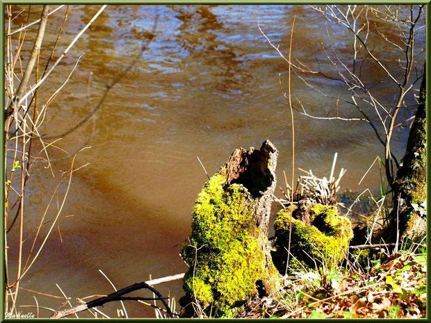 Troncs d'arbres et reflets en bordure de La Leyre, Sentier du Littoral au lieu-dit Lamothe, Le Teich, Bassin d'Arcachon (33)