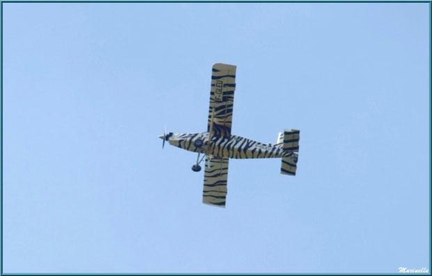 Avion zébré survolant le Zoo du Bassin d'Arcachon, La Teste de Buch (33)