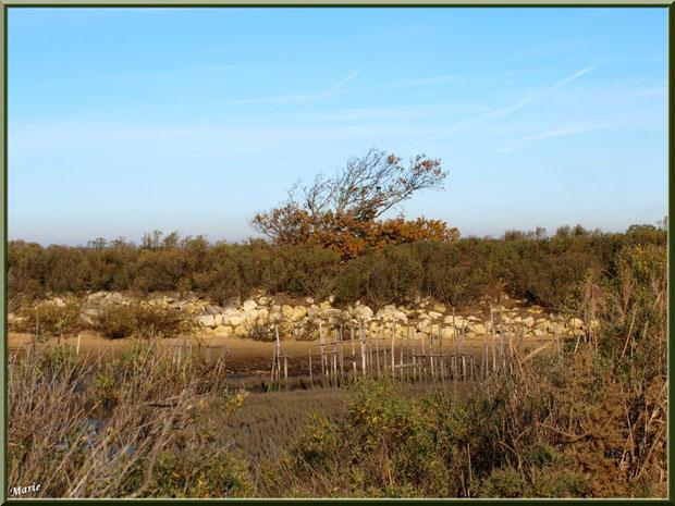 """Petit chenal, appelé """"estey"""", côté Bassin sur le Sentier du Littoral, secteur Moulin de Cantarrane, Bassin d'Arcachon"""