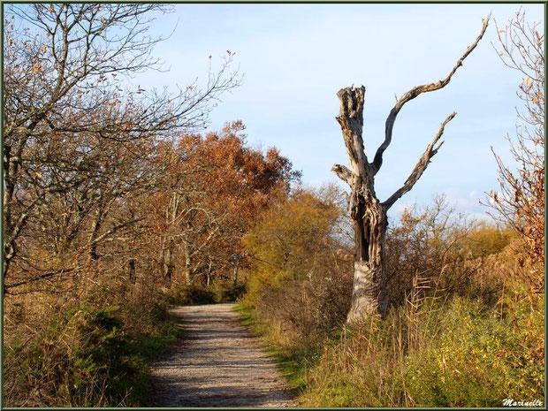 Le Sentier du Littoral au coeur de la végétation, secteur Port du Teich en longeant La Leyre, Le Teich, Bassin d'Arcachon (33)