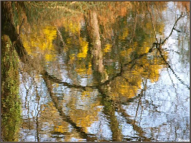 Reflets impressionnistes des mimosas sur le Canal des Landes au Parc de la Chêneraie à Gujan-Mestras (Bassin d'Arcachon)