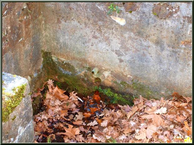 La fontaine guérisseuse Saint-Eutrope à Saugnacq-et-Muret (40) : le tuyau en bas mur montre que la fontaine ne coule plus beaucoup et les feuilles cachent les marches qui permettent d'y descendre