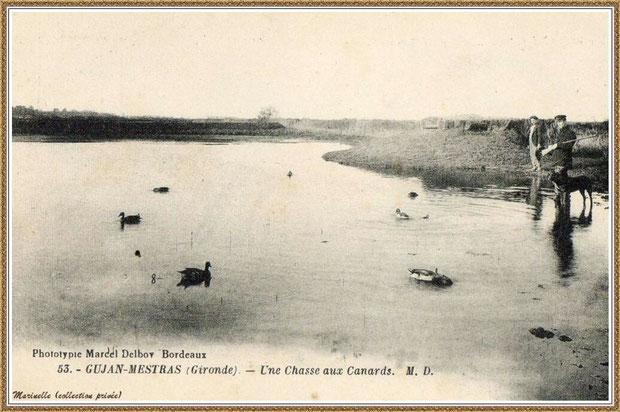 Gujan-Mestras autrefois : Chasse aux Canards, Bassin d'Arcachon (carte postale, collection privée)