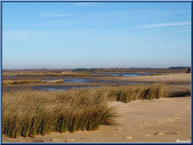Oyats entre plage et Bassin sur le Sentier du Littoral, secteur Moulin de Cantarrane, Bassin d'Arcachon