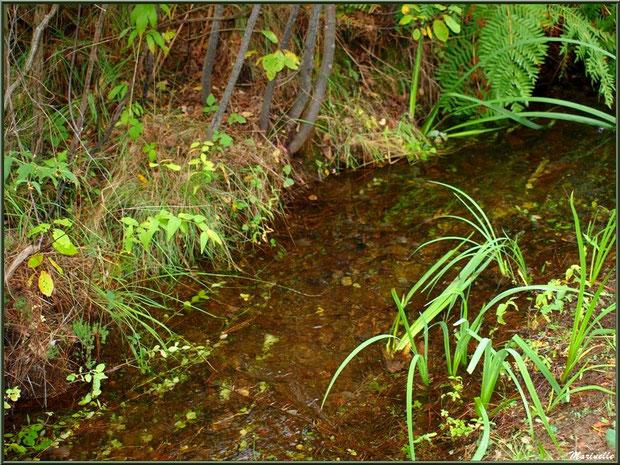 Fossé ou craste avec sa végétation, forêt sur le Bassin d'Arcachon (33)