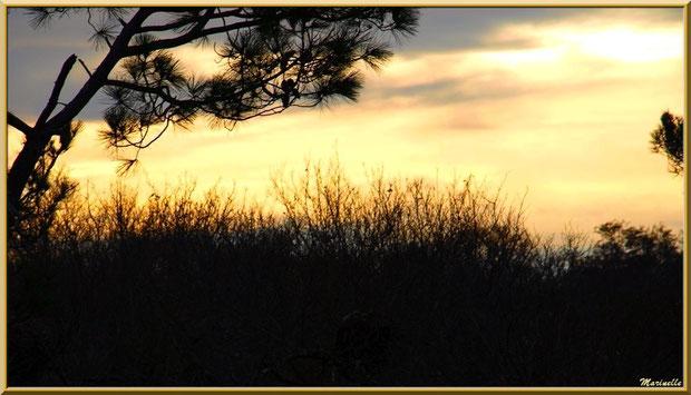 Coucher de soleil sur le Sentier du Littoral, Bassin d'Arcachon (33)