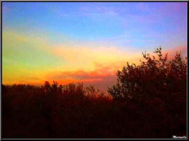 Soleil couchant en forêt sur le Bassin d'Arcachon (33)