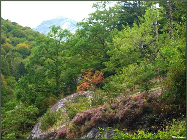 Végétation de montagne entre les Eaux-Chaudes et Gabas, Vallée d'Ossau (64)