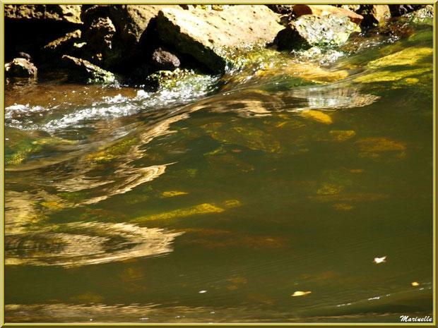 La Leyre et ses remous d'or, Sentier du Littoral au lieu-dit Lamothe, Le Teich, Bassin d'Arcachon (33)
